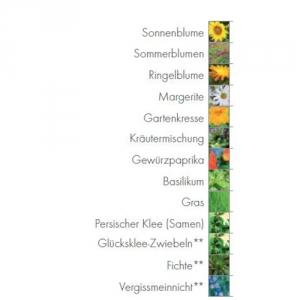 Holzwürfel mit Blumensamen in verschieden Größen.