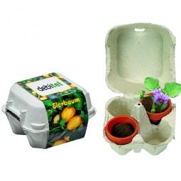 Eierbox mit Osterbaum-Samen