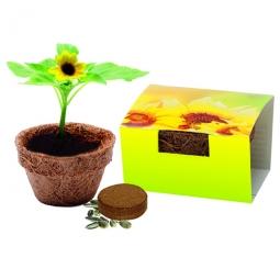 Bio Kokos-Töpfchen Sonnenblume