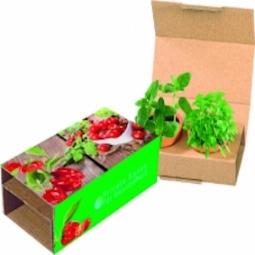 Pflanzen Pärchen in verschiedenen Ausführungen.